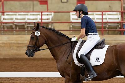 Horse 221