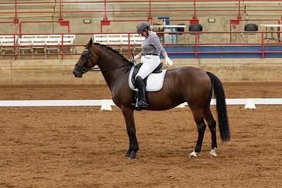 Horse 224