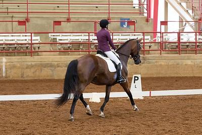 Horse 225