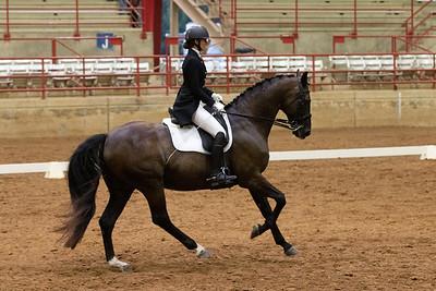 Horse 228
