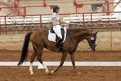 Horse 229