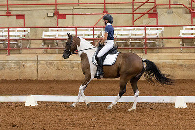 Horse 231