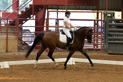 Horse 232