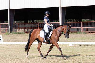 Horse 236