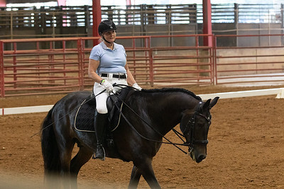 Horse 240