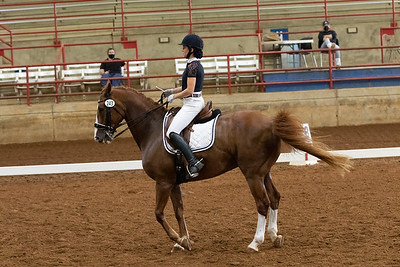 Horse 243