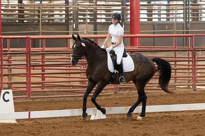 Horse 245