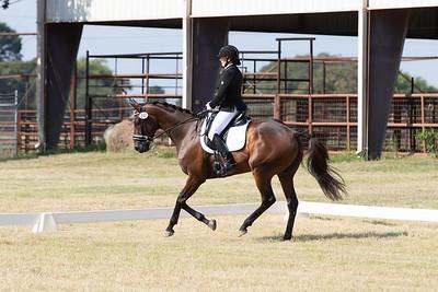 Horse 247