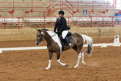 Horse 249