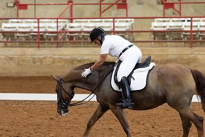 Horse 201