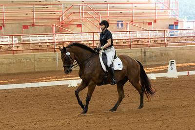 Horse 205