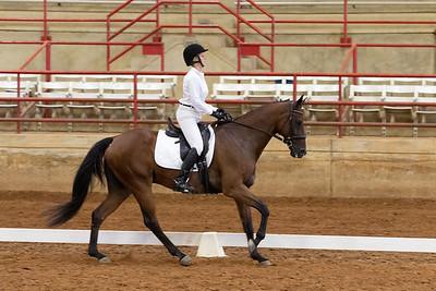 Horse 206