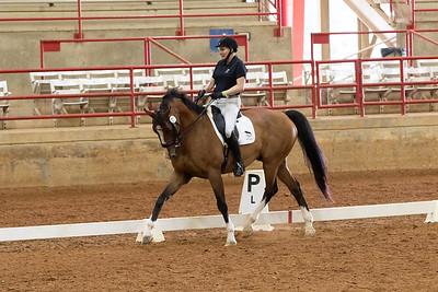 Horse 208