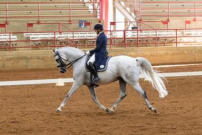 Horse 211