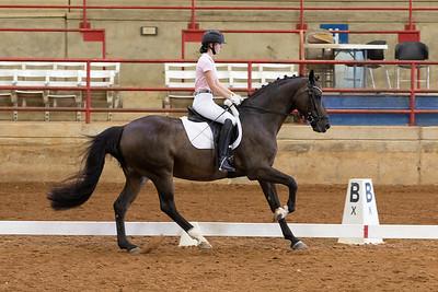 Horse 212