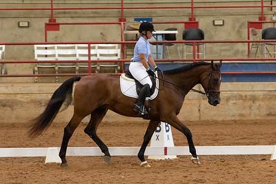 Horse 213