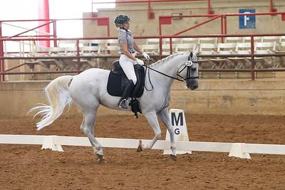 Horse 214