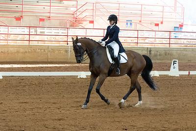 Horse 216