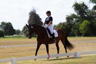 Horse 217