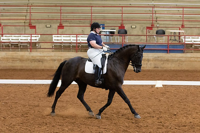 Horse 218
