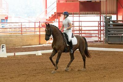 Horse 219