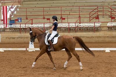 Horse 220