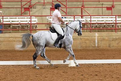 Horse 223