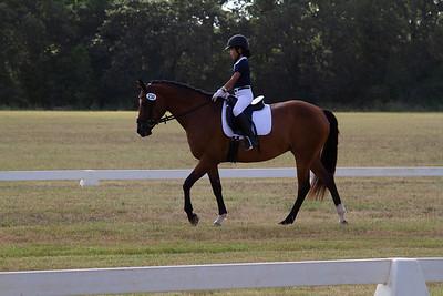 Horse 230