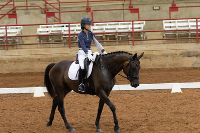 Horse 234
