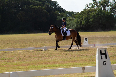 Horse 235