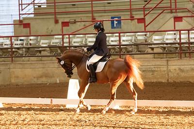 Horse 237