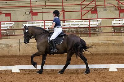 Horse 246