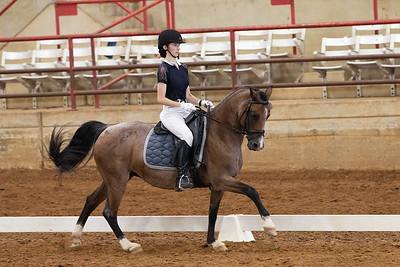 Horse 248
