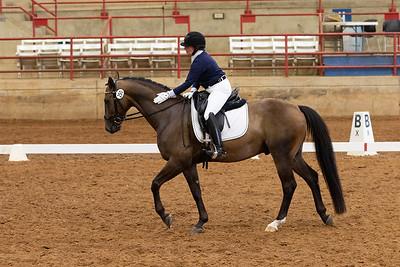 Horse 250