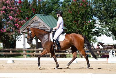 Horse 301