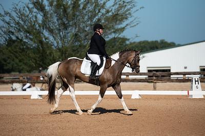 Horse 309