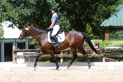 Horse 310