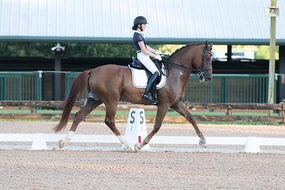 Horse 314