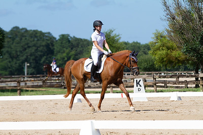 Horse 318
