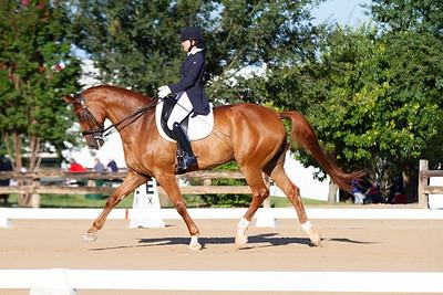 Horse 319