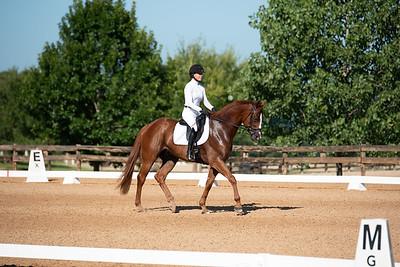 Horse 321