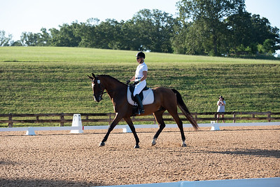 Horse 322