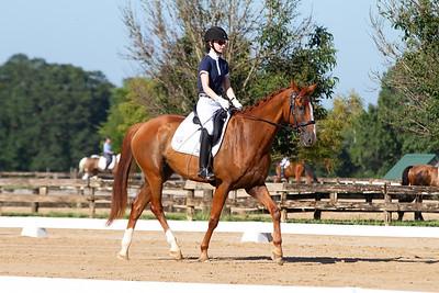 Horse 325