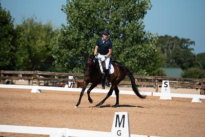 Horse 332
