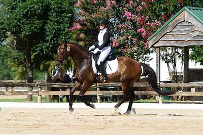 Horse 337