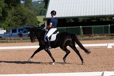 Horse 339