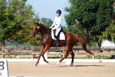 Horse 348
