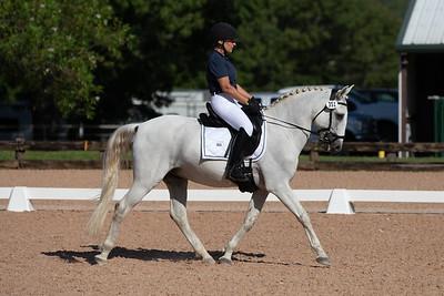 Horse 351