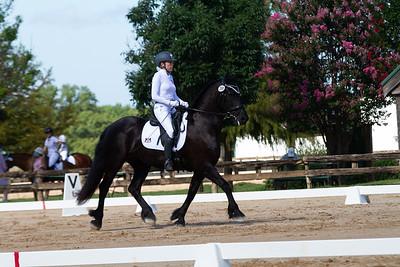 Horse 359