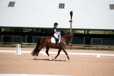 Horse 370